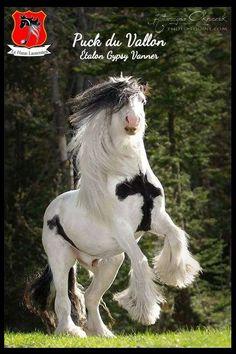 Horses & Freedom – Photos Horses & Freedom – Photos - Art Of Equitation Big Horses, Work Horses, Cute Horses, Horse Love, Most Beautiful Horses, All The Pretty Horses, Animals Beautiful, Clydesdale Horses, Friesian Horse