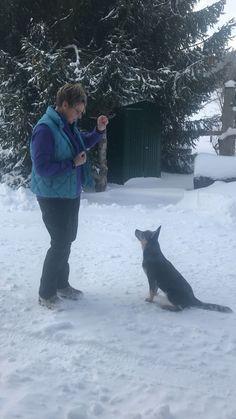 Franzi besucht uns täglich und macht auch immer gleich eines der Grundsignale. Heute: bleib! Fictional Characters, Dog Training, Pooch Workout, Puppys