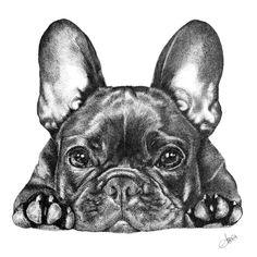 French Bulldog Wallpaper, French Bulldog Drawing, French Bulldog Tattoo, Fawn French Bulldog, French Bulldogs, Canvas Art Prints, Canvas Wall Art, France Tattoo, Sports Art