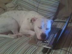 After the skype talking with his owner who is missing log time eachother.He is thinking that papa lives in a PC now.