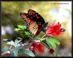 Styles :: The Butterfly Garden Tips on how to attract butterflies to your garden!Tips on how to attract butterflies to your garden!