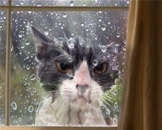 Funny grumpy cat in the rain I Love Cats, Crazy Cats, Cute Cats, Silly Cats, Cat Fails, Photo Chat, Angry Cat, Angry Birds, Here Kitty Kitty