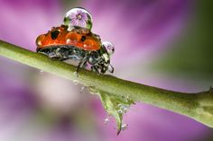 Pearl droplets: Stunning images of dew