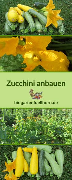 Growing zucchini successfully How to grow zucchini successfully! # grow zucchini # zucchini garden # grow vegetables zucchini Growing zucchini successfullyHow to Successfully Grow Your First Grape Vines Balcony Garden, Herb Garden, Garden Pots, Diy Garden, Herb Planters, Herb Pots, Hanging Planters, Garden Care, Growing Herbs