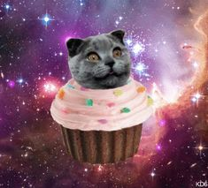1000 images about cats in space on pinterest space cat
