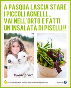 A Pasqua lascia stare i piccoli agnelli.. vai nell'orto e fatti un'insalata di piselli!