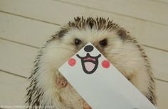 Marutaro Happy (http://laughingsquid.com/marutaro-the-hedgehog-poses-for-pictures-with-illustrated-masks-made-for-just-for-him/)