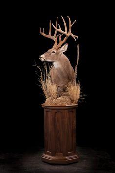 93 – Whitetail Deer