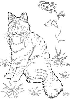 cats coloring pages animal pet kitten to coloring 11