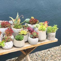 Planta Nursery Plantanursery On Pinterest