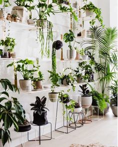 Monday! Let's do this. Big thanks to Lucy and Lisa Marie @thedesignfiles for this morning's article on our new Botanical Emporium. And to @ameliastanwix for capturing it so beautifully! What an awesome way to start the week. #ivymuse #ivymusebotanicalemporium #tdf