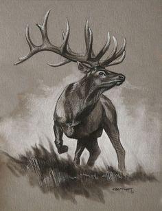 Bull Elk Original Sketch