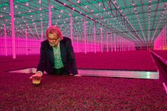 """Independent: """"The micro-vegetable revolution: Could Rob Baan's cress combat cancer?"""""""