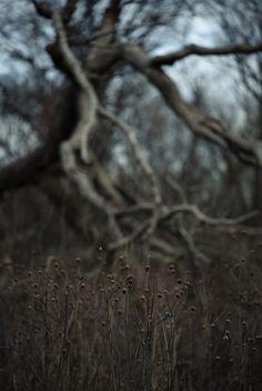 savanna | Flickr - Photo Sharing!