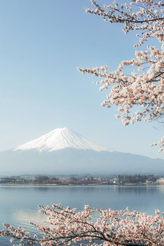 Sakura in Japan. What to pack for Japan in the Spring. 20 items, 10…
