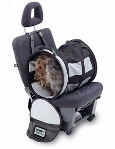 Petego Pet Tube Car Kennel For Transporting Your Cat In Maximum Safety And Comfort