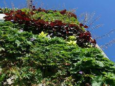 Product NBD - Vertigreen, gevelgroen voor binnen en buiten van ZinCo. Waarom alleen horizontaal groen, in tuin of op het dak? Het kan ook tegen de gevel! Vertigreen by Zinco: a vertical garden against the facade. Better living environment, better micro climate and other benefits.
