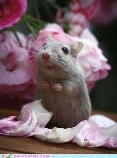 Are these flowers for me?!? Thank you, they're delicious!