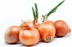 Chewing raw onions for 2 to 3 minutes can potentially kill all the germs present in the oral area and health benefits of onions Onion Benefits Health, Fertilizer For Plants, Herb Seeds, Wheat Grass, Healthy Fruits, Edible Garden, Stuffed Green Peppers, Vegetable Garden, Natural Remedies