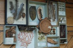 specimen storage box plants - Google 検索