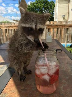 Animais Blue Things blue color schemes for websites Funny Animal Quotes, Cute Funny Animals, Cute Baby Animals, Animals And Pets, Fat Raccoon, Racoon, Rocky Raccoon, Cute Animal Photos, Animal Pictures