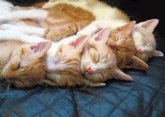 Napping with siblings