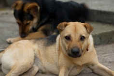 Natural remedies to help your dog's skin conditions