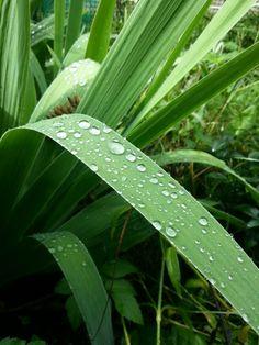 #green #zieleń #aloes #water #kropelki #rosy
