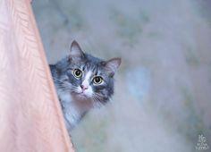Photo Curiosity by Elaine Elena S on 500px