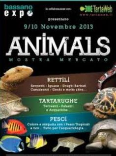 2013 - Animals Exhibit and Sale -  Nov. 9, 9:30 a.m. to 7 p.m. and Nov. 10, 9:30 a.m. to 6:30 p.m., in Bassano del Grappa, Via Valsugana 22, about 22 miles northeast of Vicenza; exhibit and sale of reptiles, amphibians, insects, fish, aquarium accessories, gadgets; entrance: €5, free for children under 16.