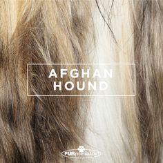 #Dog-Inspired #Design: We think the best, most #beautiful #coats belong to our four-legged family members. #AfghanHound