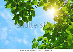 Blue Sky With Green Leaves zdjęć stockowych, obrazów i zdjęć | Shutterstock