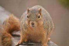 I love squirrels!!
