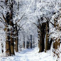 43 Ideas christmas tree forest wonderland paths for 2019 Winter Szenen, I Love Winter, Winter Magic, Winter Christmas, Winter Road, Winter Walk, Magical Christmas, Winter White, Christmas Tree