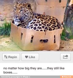 if its a cat, just give it a box ^^ It will be happy <3