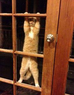 Wenn meine Katze von draußen, rein möchte - WTF Bild - Webfail