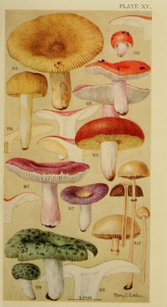 Field book of common gilled mushrooms : - Biodiversity Heritage Library Botanical Drawings, Botanical Illustration, Botanical Prints, Illustration Art, Illustrations, Ecole Art, Mushroom Art, Nature Journal, Gravure