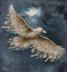 Viva The White Raven by Ali Oppy - Website Crow Art, Raven Art, Chalk Drawings, Bird Drawings, Fantasy Kunst, Fantasy Art, Raven And Wolf, White Raven, Quirky Art