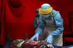 E' possibile trasmette l' Ebola anche in assenza di sintomi. Stop quindi a chi è stato in Africa negli ultimi 2 mesi. La decisione, presa dal Centro Nazio