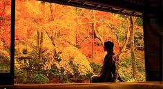 【1ヶ月限定】瑠璃光院の紅葉が「幻の絶景」と呼ばれる理由とは?