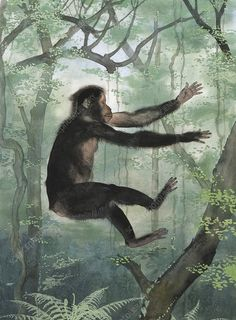 This ape-like mammal lived between around million years ago. It is thought to have been an ancestor of humans. It lived in tropical forests in East Africa during the Miocene. Artwork by Maurice Wilson. Buy Prints, Framed Prints, Canvas Prints, Primates, Mammals, Tropical Forest, East Africa, History Museum, Illustrators
