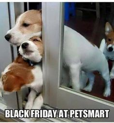 Black Friday At Petsmart.