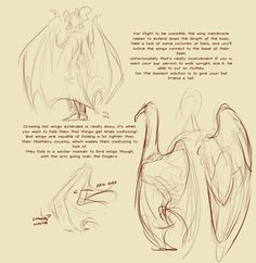 How to draw an electric dragon step by step dragons draw a dragon this is a spiritual sequel to thoughts on wings by uzlo which is also on tumblr anyway while reading the tags and comments on said tutorial ccuart Image collections