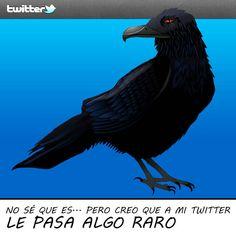 ¿Qué le pasa a mi Twitter?