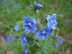 All Newest - Pixdaus | flowers spain cimanes del Tejar León españa By: fanny peñaranda