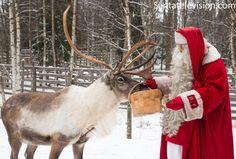 Le Père Noël nourrit un de ses rennes au Village du Père Noël en Laponie