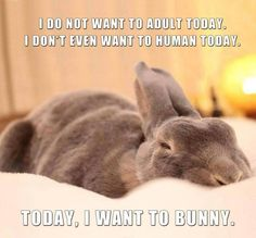 Oh yeah, the bunnies here get catered meals, no work, all play ... yeah I want to bunny too!