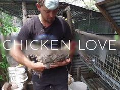 Chicken Love - YouTube