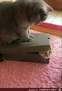 Funny animal pictures of the day - 16 images funny cat pics, funny animal humor I Love Cats, Crazy Cats, Cool Cats, Bad Cats, Baby Animals, Funny Animals, Cute Animals, Funniest Animals, Kittens Cutest