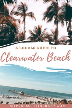 A Local's Guide to Clearwater Beach Florida, Best Beach in the USA, 1 Week Itinerary to Clearwater Beach Florida, Clearwater Marine Aquarium, Winter the Dolphin, Dolphin with no tail.
